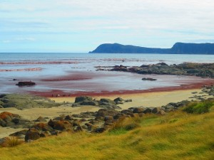 mer-rouge-cloudy-bay