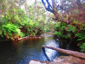 rocks-pool-tasmania