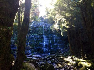 nelson falls cradle mountains