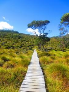 depart rando cradle tasmanie