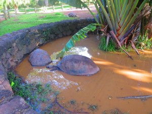 tortue-geante-ile-maurice
