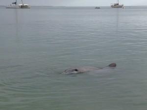 dauphin-monkey-mia-shark-bay-australia