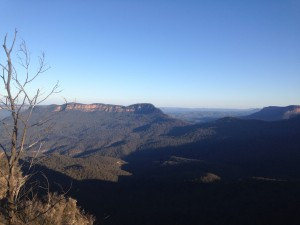 blues-mountains-eucalyptus-australie